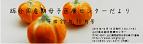 総合周産期医療センターだより 平成27年10月 バックナンバー画像